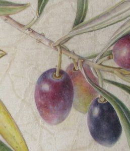 Watercolour painting on calfskin vellum of olives by Shevaun Doherty