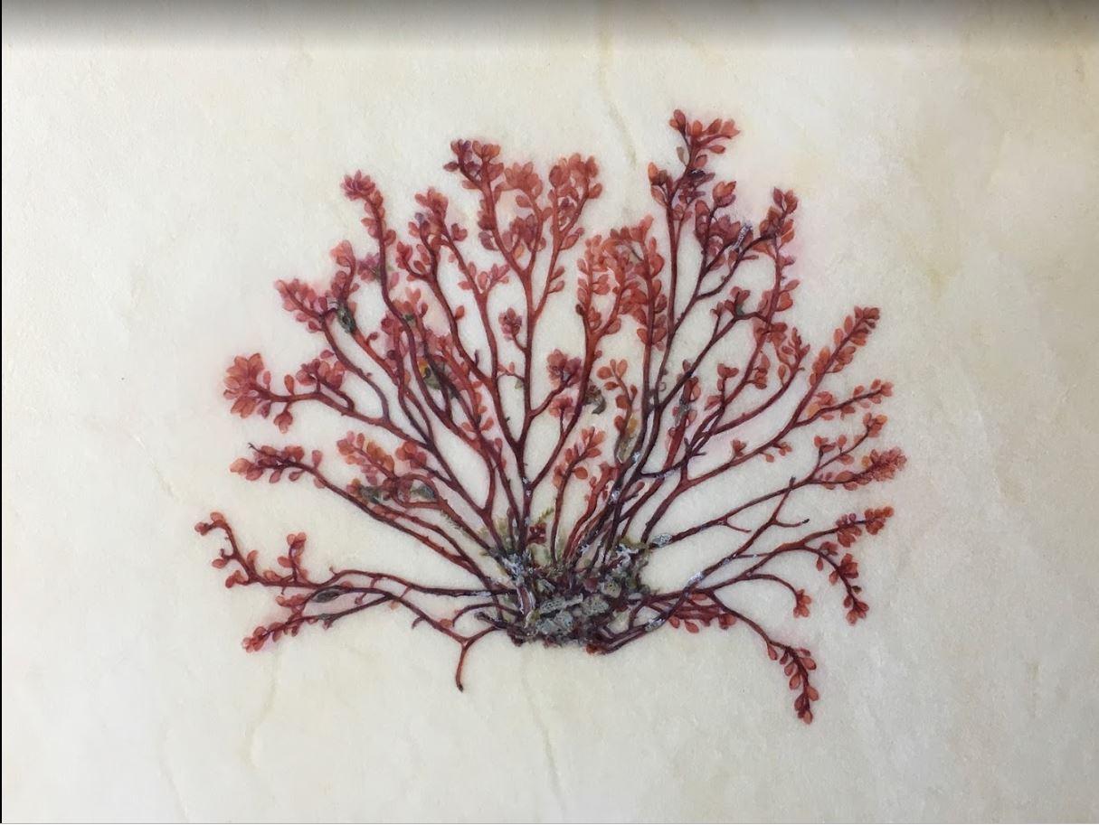 Ellen Hutchins work-1