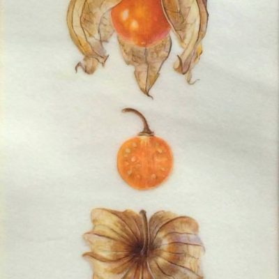 Original watercolour painting on vellum of three orange physallis fruit