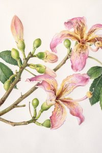 Painting of tree branch with pink flowers and buds by Shevaun Doherty