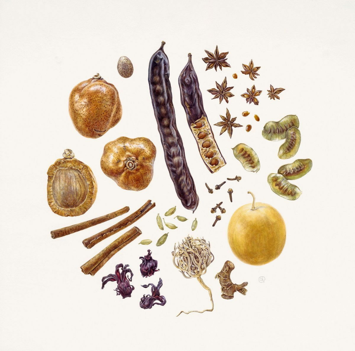 Watercolour of medicinal spices from arab market by Shevaun Doherty