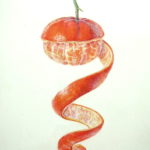 watercolour painting of mandarin orange with spiral peel on kelmscott vellum