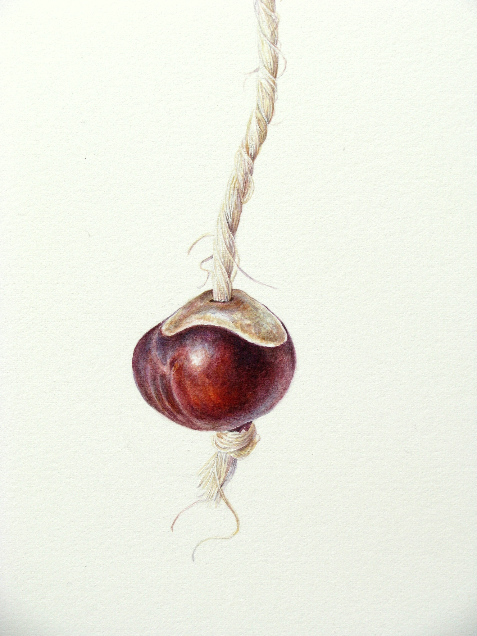Watercolour painting of conker on string by Shevaun Doherty