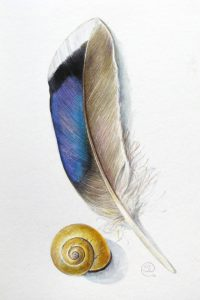 Painting of a blue feather and a yellow snail shell