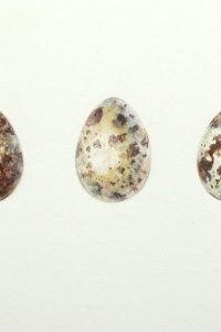 Painting of three speckled quail eggs on paper