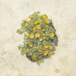 Green lichen with golden discs painting on natural calfskin vellum