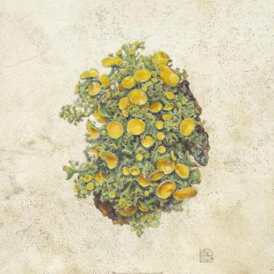 Green lichen with golden discs painting on natural calfskin vellum