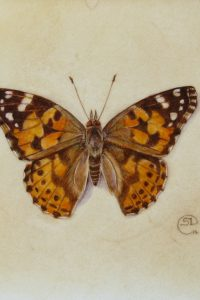 Painting of an orange and brown butterfly on a natural calfskin surface