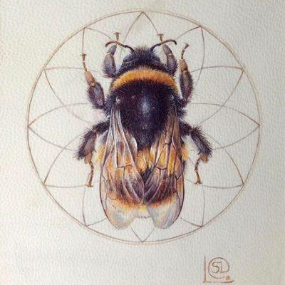 Chicheley Bee-Sheavaun Doherty
