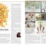 'The Botanical Artist' American Society of Botanical Artists - September 2015