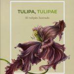 3. Tulipa Tulipae, NJBM 2018, shevaun doherty