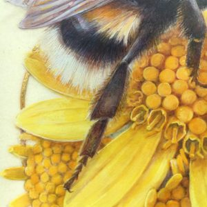 watercolour painting of fine details on bee and flowers