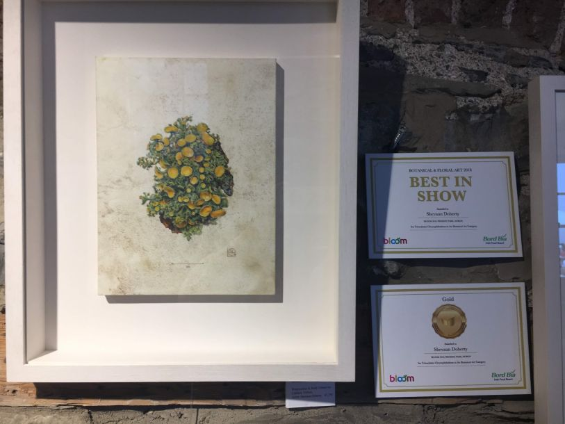 Golden Eye Lichen Gold Medal awarded to Shevaun Doherty