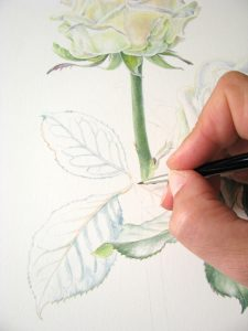 watercolour painting of rose leaves