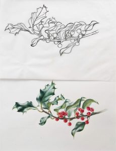 Ilex aquifolium with simple line drawing