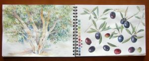 Sketchbook pages of olive tree and olives in watercolour