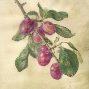 plums on calfskin