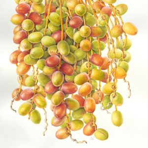ripening dates